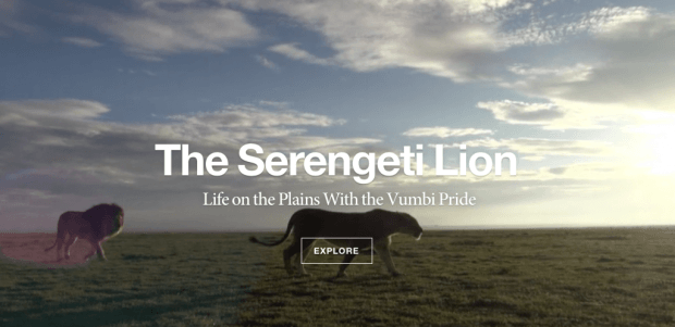 The Serengeti Lion