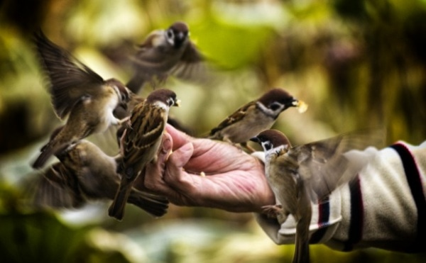 Фото: Diego Cambiaso/ CC BY 2.0/http://www.imcreator.com/free/people/men/feeding-birds