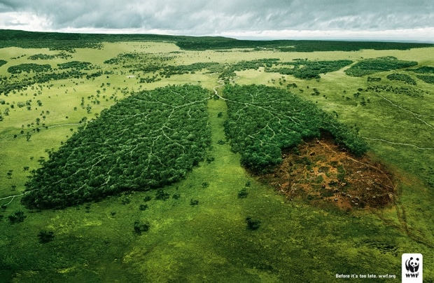 Deforestation And The Air We Breathe: Before It's Too Late