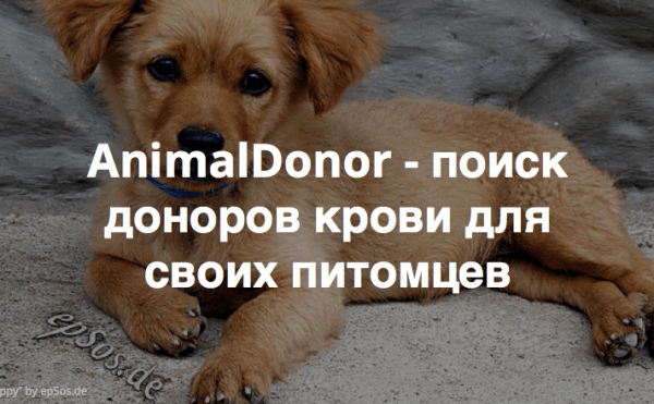AnimalDonor